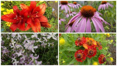 kolazh-cvety