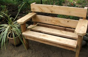 cordyline-garden-bench