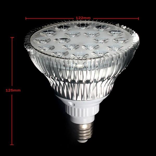2lamp