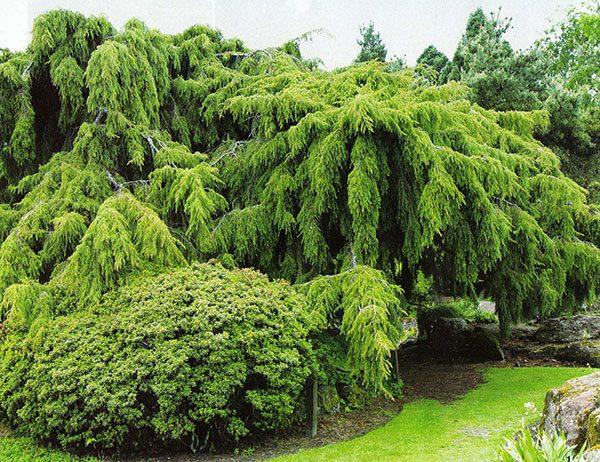 159Композиции растений в ландшафтном дизайне на