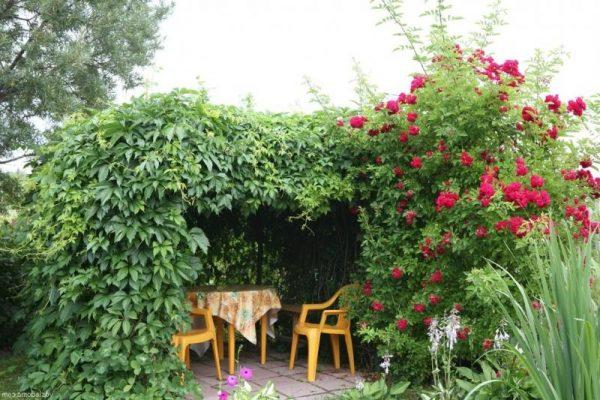 Картинки по запросу вьющиеся декоративные растения