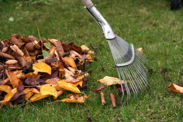 Raking autumn leaves, gardening during the holidays (horizontal)