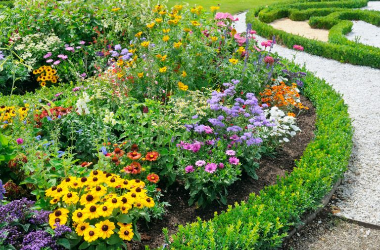 Многолетние цветы сажаем осенью 6